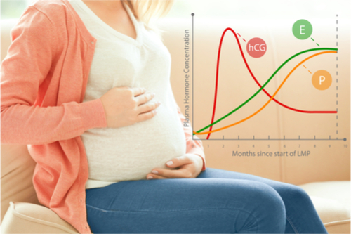 Improved-metabolism-in-pregnant-women